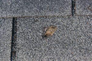 damaged Wichita roof shingle